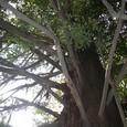 たくさんの枝