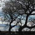 琵琶湖湖岸の木々