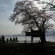 海津から琵琶湖を望む