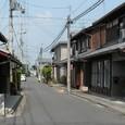 矢橋道を横切る猫
