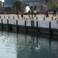 大津港の水鳥