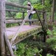 苔むす木の橋