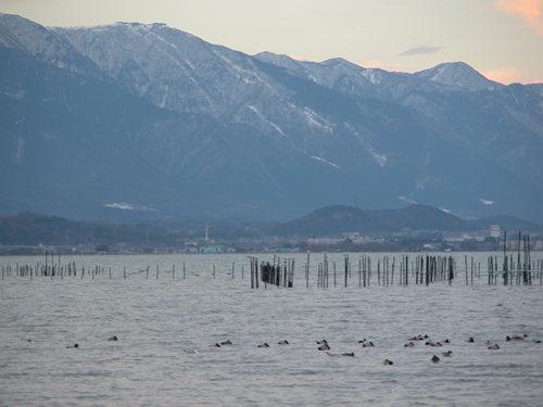 琵琶湖のエリと比良山系と鴨