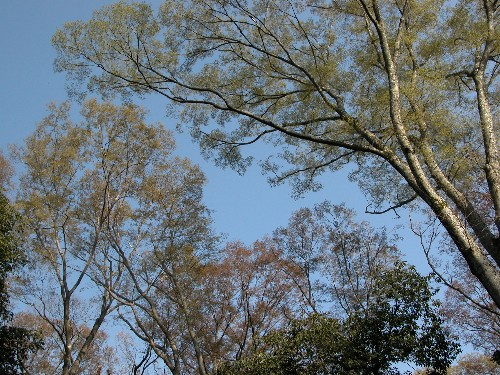 河辺いきものの森の春