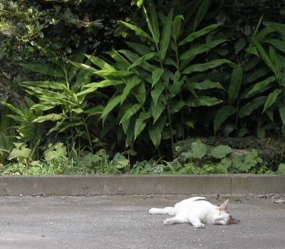 豊郷の眠り猫