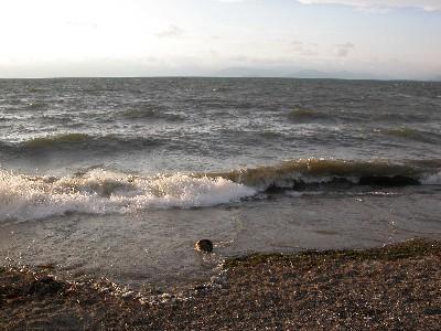 琵琶湖の波