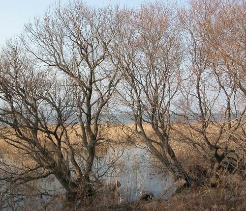 琵琶湖の湖岸の春の気配