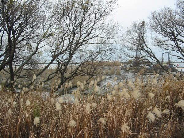20061216yoshi1