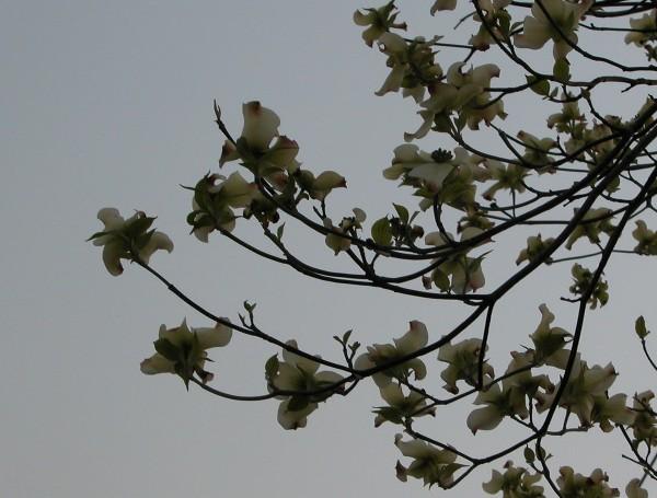 2006425hanamizuki2
