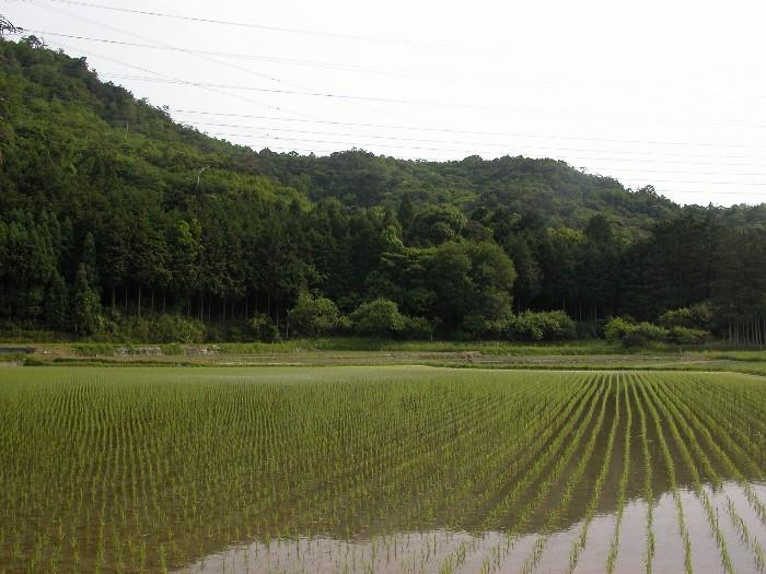 2006525tanbo