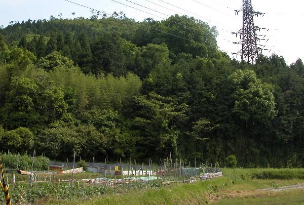 2006525yama