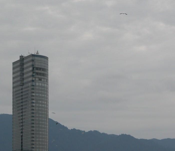 2006912sagi