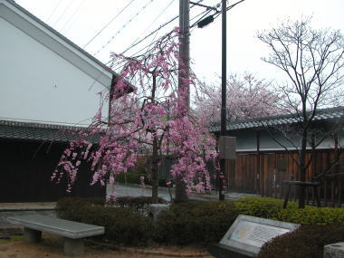 200847ha2sakura