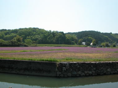 200853renge1