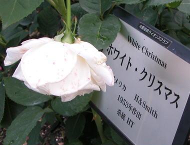 2008531nr12wc