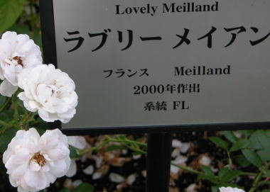 2008531nr8love