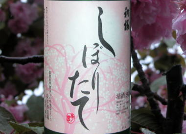 2009426hatsusakura2