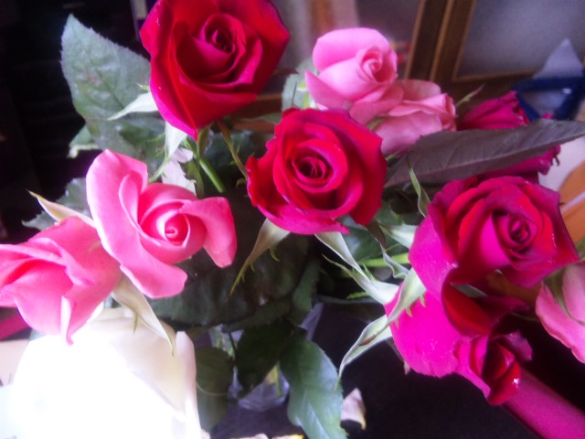 おうみんちのバラ