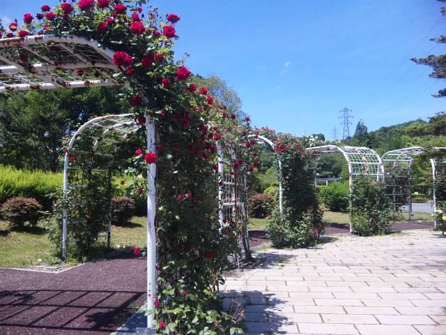 近江富士花緑公園のバラ