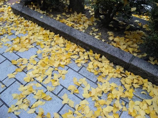 銀杏の黄色