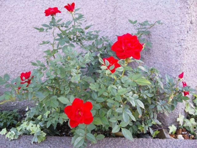 madocafeの花壇