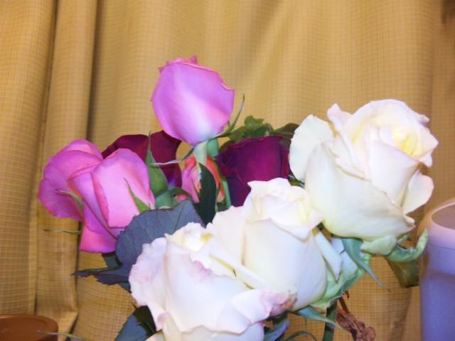 おうみんちで買ったバラ
