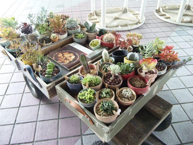 観葉植物屋キャラバン
