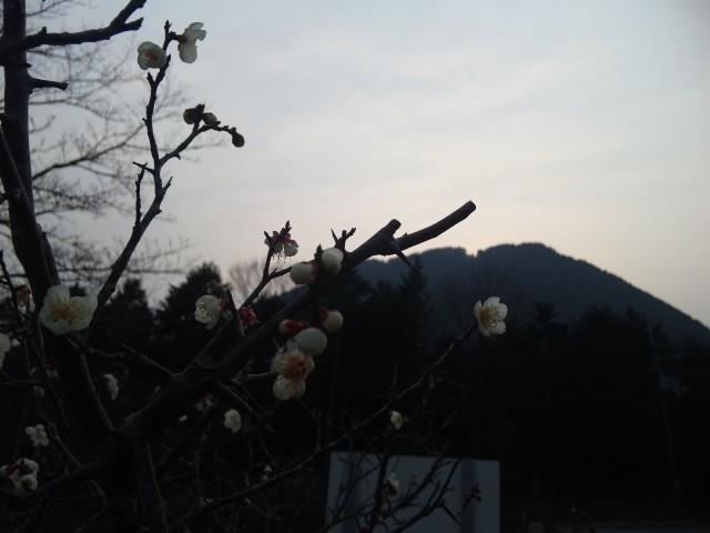 そっか、春なんだ