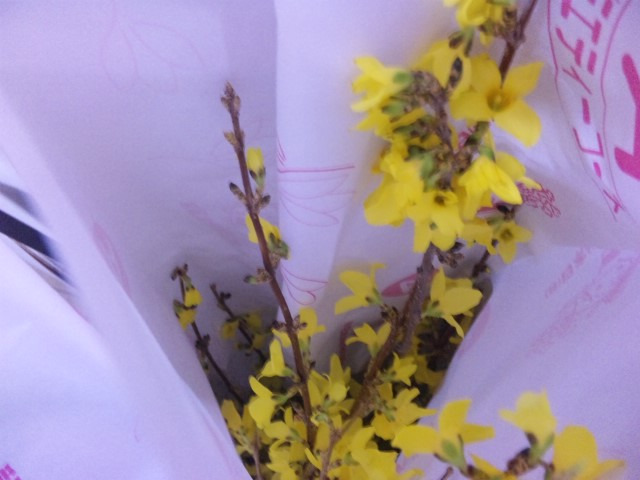 レンギョウの花束