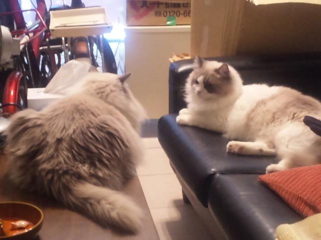 昼下がりの猫集会