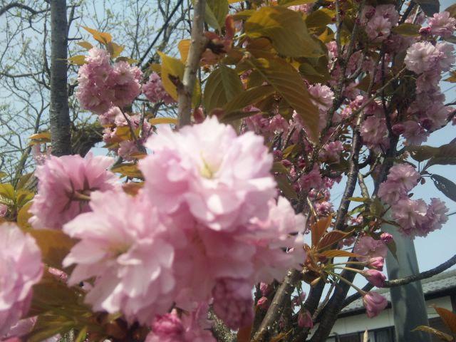海津の春景色