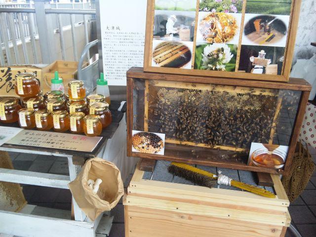 朝市に日本蜜蜂さんたち登場