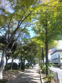 琵琶湖湖岸通り付近