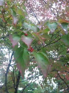皇子山公園の秋