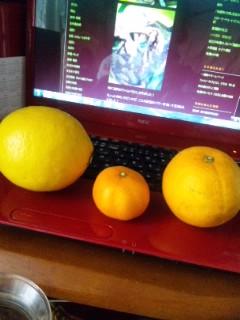 レモン、みかん、ネーブル