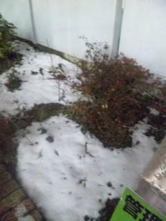 少し残っていた雪