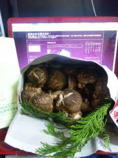 三重県赤目から原木椎茸