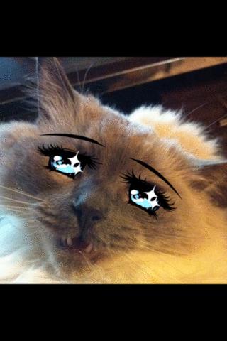 もふ曜日の☆の瞳