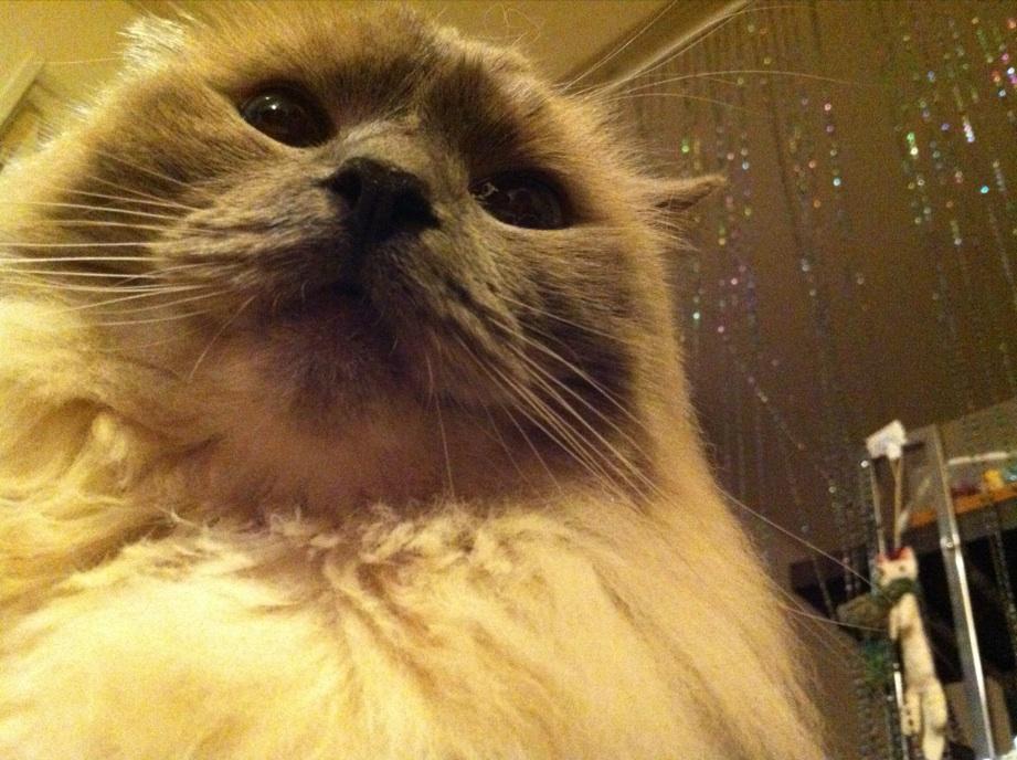 別猫もふサタデー