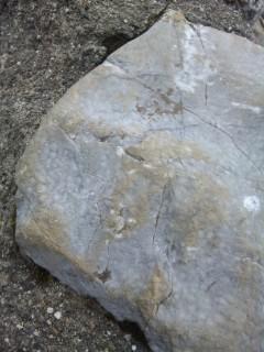 伊吹山は石灰岩