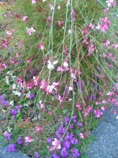 秋の雨に打たれる花