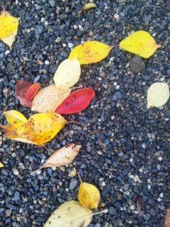 紅葉落ち葉、菊