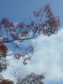 紅葉、黄葉、青空