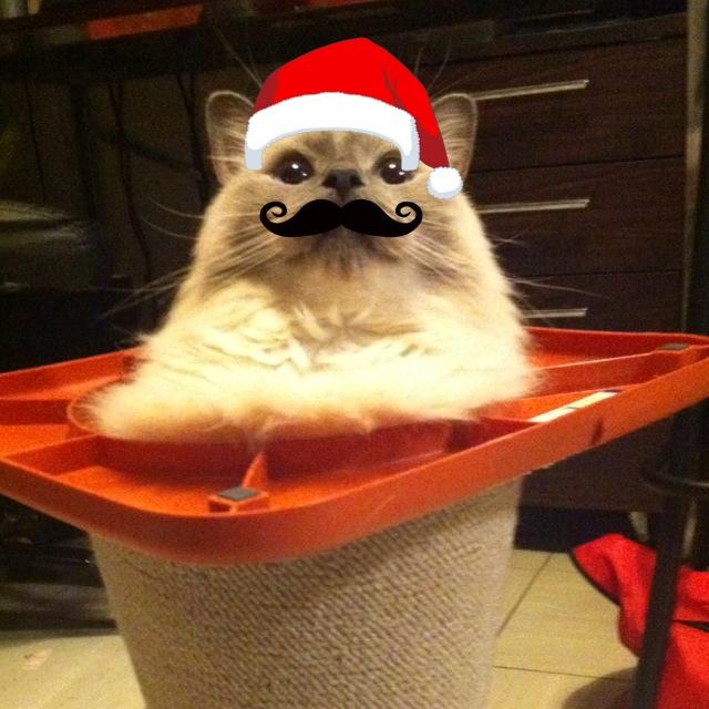 ちょっぴり早いけどメリークリスマス!