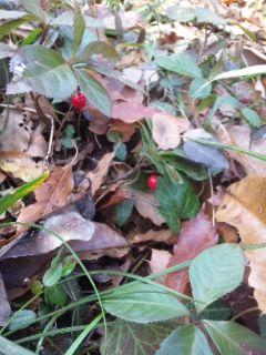 冬の赤い実青い実