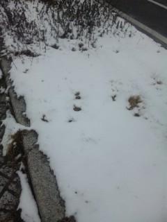 仕事先までの道には雪しっかり