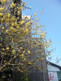 大津の春見つけた