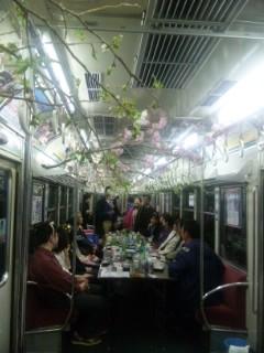 夕べはお花見電車でした