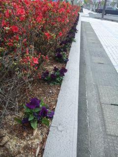 大津 紫の道