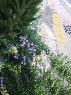 春の花と葉っぱ